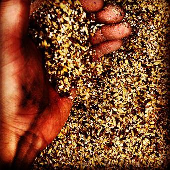 Beer, Craft, Malt, Barley, Hand, Hands, Organic, Brew