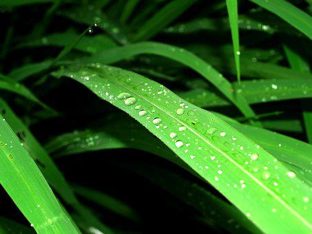 Water, Drops, Leaf, Grass, Green, Dew, Rain, Closeup