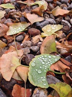 Dew, Leaves, Leaf, Nature, Green, Water, Wet, Drop