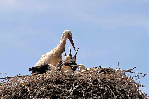 Stork, Nest, Feeding, Nesting, Stork's Nest, Bird