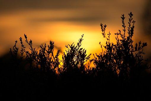 Sunset, Erika, Heather, Yellow, Orange, Mood