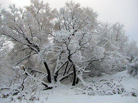 Snow, Frost, Winter, Season, Ice, Tree, Snowfall