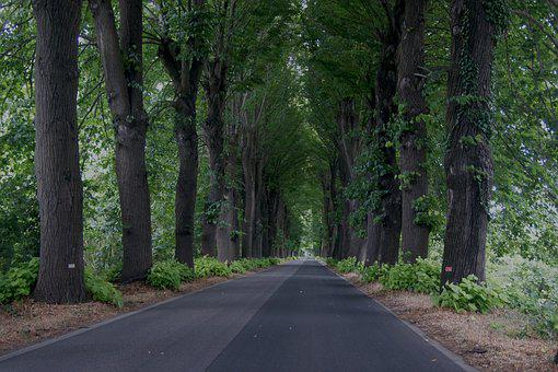 Trees, Road, Distance, Viewpoint, Nature, Landscape