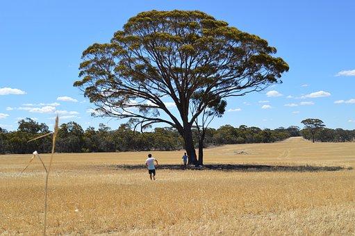 West Australia, Country, Narrogin, Australia, Farm