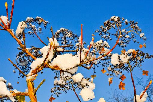 Plant, Winter, Snow, Covered, Nature, Tree, Branches