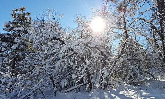 Snow, Winter, Sunshine, Cold, White, Nature, Landscape