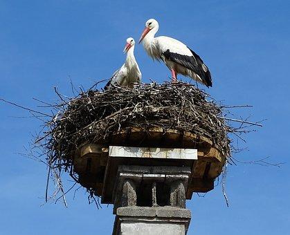 Stork, Nest, Bird, Stork Couple