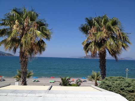 Palm Trees, Sea, Roof Terrace, Holidays, Summer, Island