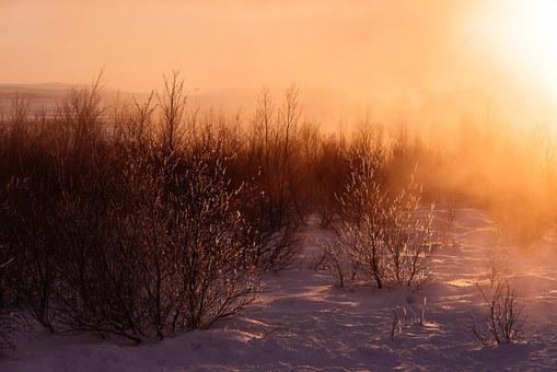 Frosty, Snow, Snowfall, Winter, Wintry, White, Nature