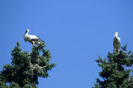 Stork Couple, Bird Park, Walsrode, Park, Macro