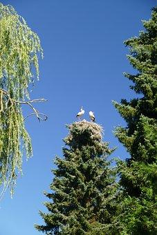 Storks, Treetop, Nest Cherish, Bird Park, Walsrode