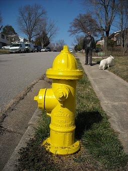 Hydrant, Street, Dog, Walk, Fire, Safety, Metal, City