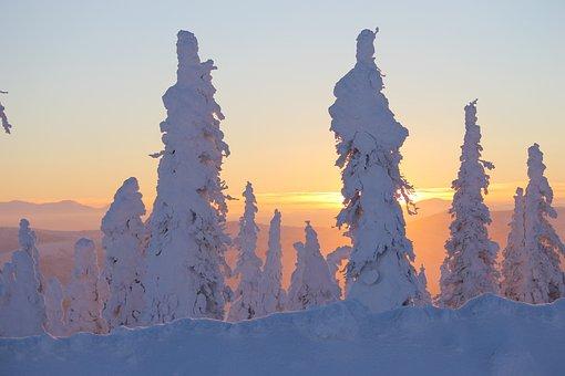 Sunset, Ice, Alaska, Trees, Snow Covered