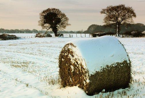 Snow, Hay, Bale, Winter, Nature, White, Season, Farm