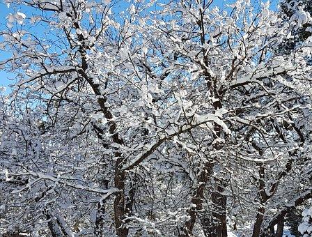Trees, Snowfall, Snow, Winter, December, Season, White