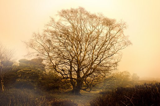 Tree, Trees, Fog, Weather, Seasons, Autumn, Winter