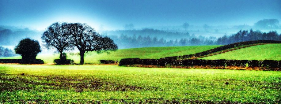 North, Nature, Tree, Yorkshire, Field, Fog, Background