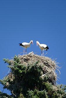 Storks, Treetop, Nest Cherish, Young, Bird Park