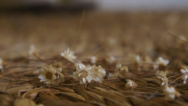 Flower, Carpet, Rustic