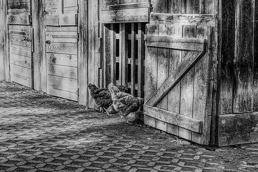 Chickens, Chicken Coop, Stall, Poultry, Farm, Bird