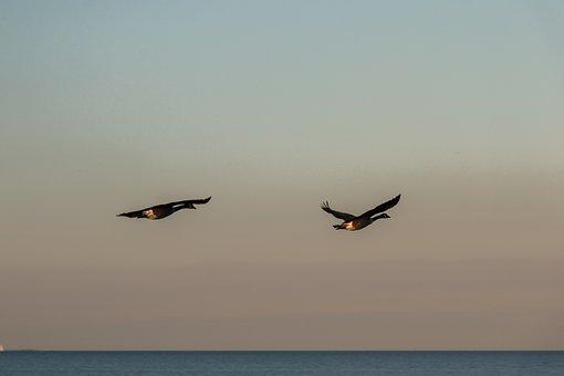 Geese, Wave, Baltic Sea, Sea, Water, Beach, Coast