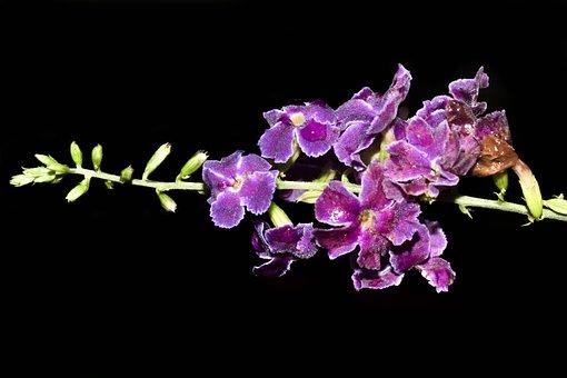 Flowers, Purple, Guayacan, Purple Flowers, Nature