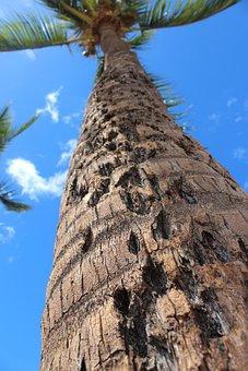 Hawaii, Palm Tree, Tropical, Paradise, Sky