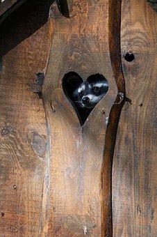 Heart, Animals, Raccoon, Klohaus, Toilet, Curious