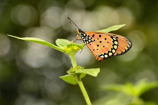 Butterfly, Kupu-kupu, Bokeh, Macro, Butterfly Isolated