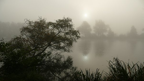 Autumn, Early Morning With Fog, Mood, Landscape, Nature