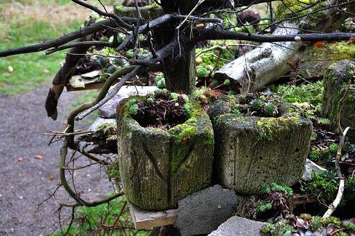 Autumn, Moss, Overgrown, Fouling