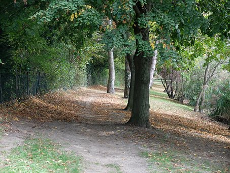Trees, Path, Nature, Leaves, Field, Allee