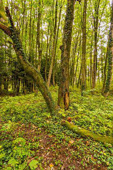 Forest, Tree, Nature, Forest Floor, Overgrown, Away