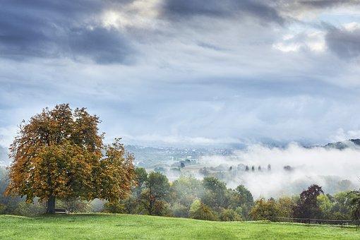Fog, Neckar, Early In The Morning, Mood, Morning Hour