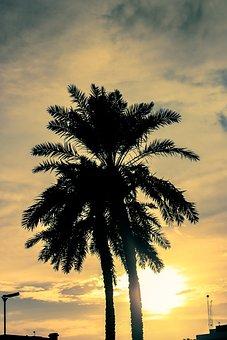 Sunset, Palm Trees, Palm Tree, Palm, Tree, Tropical