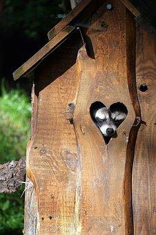 Raccoon, Heart, Cute, Sleeps, Marten, Valentine's Day