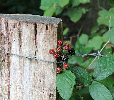 Berries, Autumn Beginning, Nature, Close, Plant