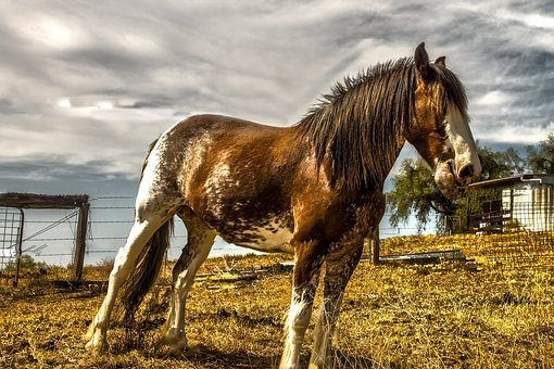 Horse, Farm, Animal, Brumbie, Hoof, Bush, Australia