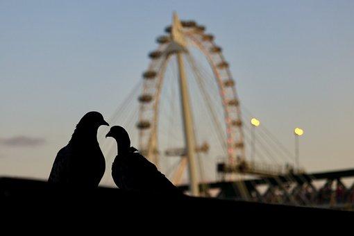 London, United Kingdom, Uk, London Eye, Birds, City