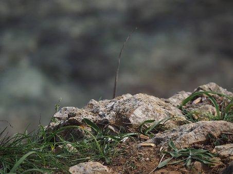 Stone, Grass, Brown, Close, Macro, Plant, Grasses