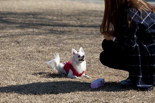 Dog, Pet Dogs, Pet, Puppy, Walk, Cute