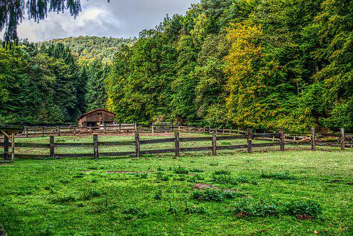 Pasture, Cattle Fence, Fence, Wood Fence, Meadow