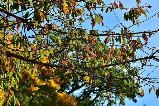 Nature, Forest, Trees, Autumn, October, Golden October