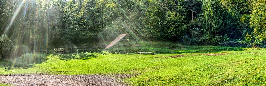 Forest, Meadow, Green, Sunbeam, Back Light