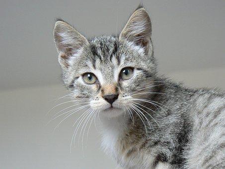 Animals, Kitten, Cat, Cute, Domestic Animal, Feline