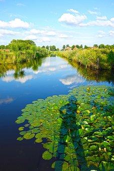 Shadow, Canal, Water Lily, Water, Skies, Banks, Lake