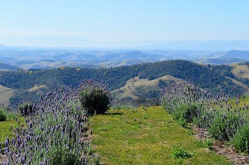Lavender, Lavender Field, Beautiful, Nature, Landscape