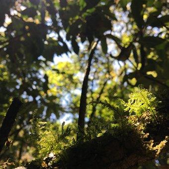 Doi Inthanon, Nature, Mountains, High, Beauty, Sky