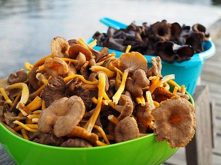 Mushroom, Funnel Chanterelles, Black Trumpet Mushrooms