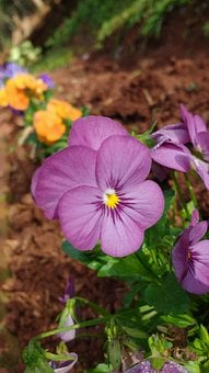 Flowers, Earth, Basics, Caara, Cellular, Cute, Nature